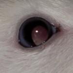 Blindheit / grauer Star